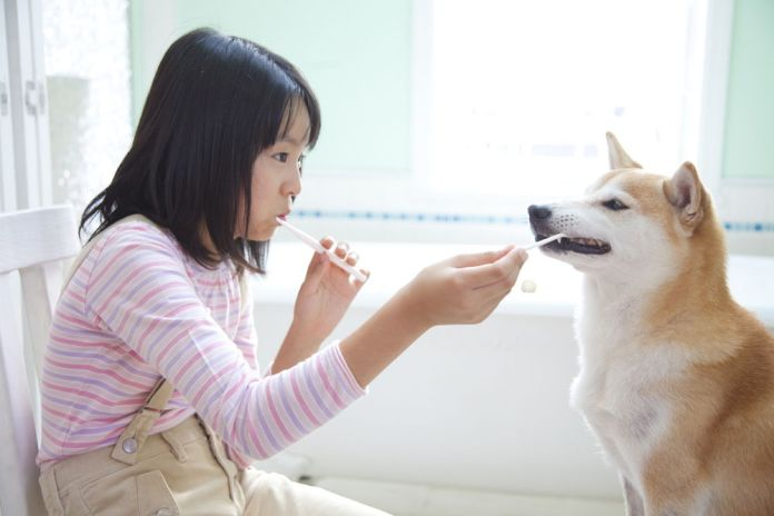 Girl brushing her teeth with Shiba Inu