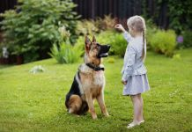 are german shepherds hard to train