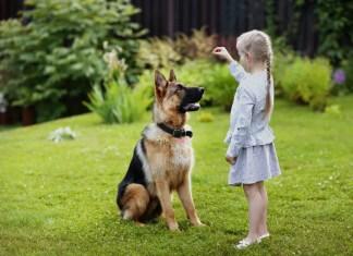 are german shepherds hard to train