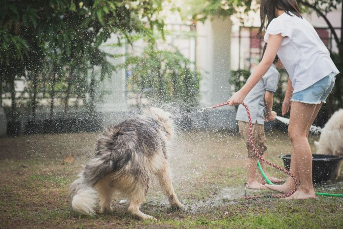 Asian children wash siberian husky dog on summer day