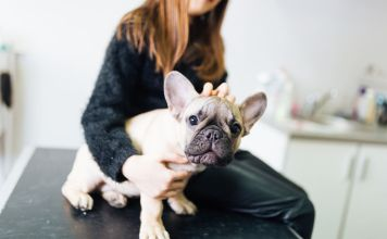 do french bulldogs have health problems