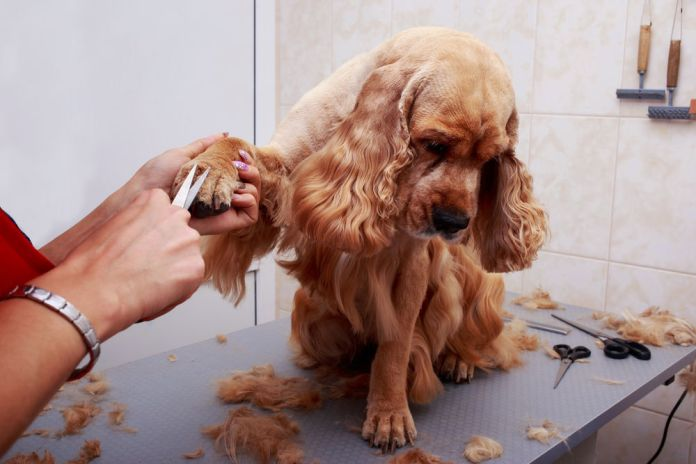 dog acting weird after grooming