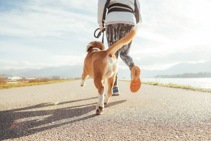 how much exercise does a beagle need