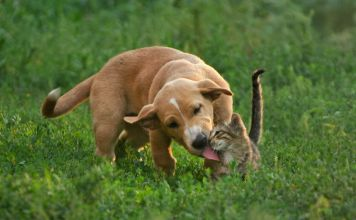 what does it mean when a dog licks a cat