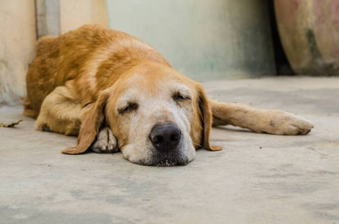 appetite stimulant for dogs with cancer