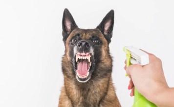 spray dog with vinegar to stop barking