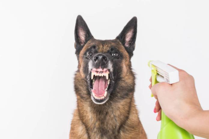 spray dog with vinegar to stop barking