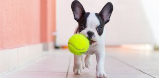 Are Tennis Balls Bad For Dog's Teeth