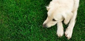 Can Dogs Get Postpartum Depression