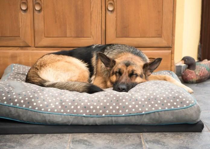 german shepherd dog sleeping
