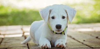 What Are the Benefits of CBD Oil for Dogs