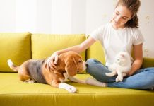 5 Amazing Items You Should Have On Hand For Your Pet