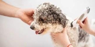 Dog Grooming 101