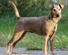 Породы собак c фото, описание всех пород собак, цены ...