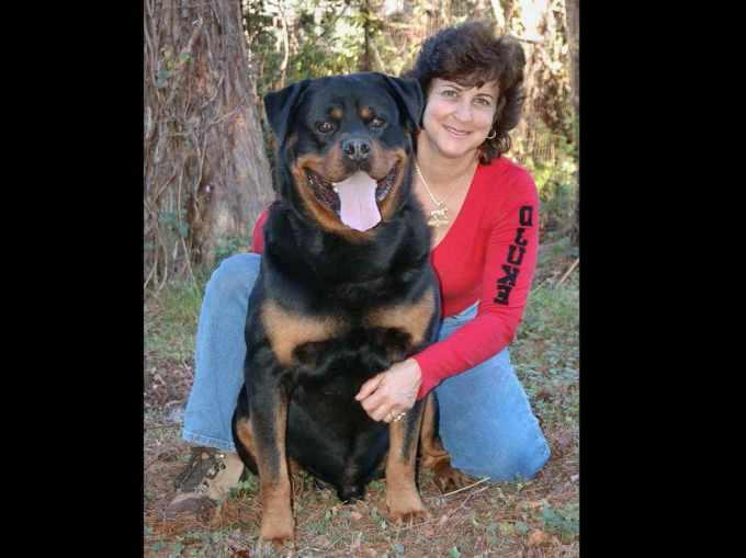 Akc Registered Rottweiler