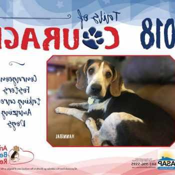 Arizona Beagle Rescue