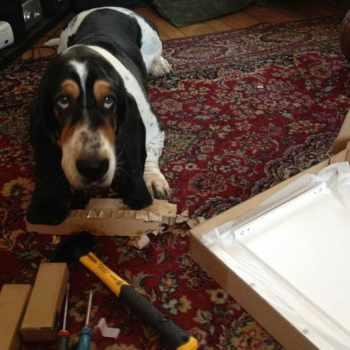Basset Hound Furniture