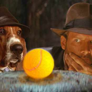Basset Hound Movies