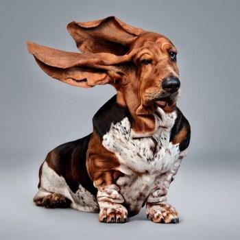 basset hound stuff