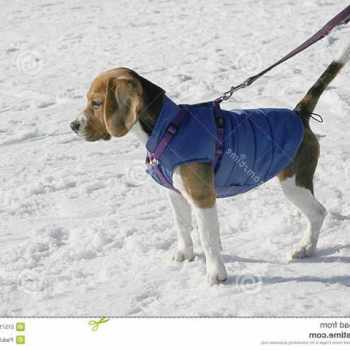 Beagle Dog Clothes