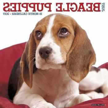 Beagle Puppy Calendar