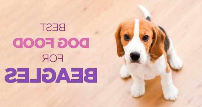 Beagle Puppy Food