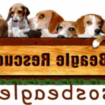Beagle Rescue Alabama