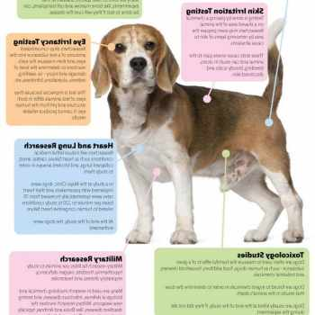 Beagle Research