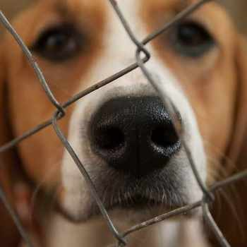 Beagle Shelter