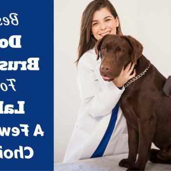Best Brush For Labrador Retriever