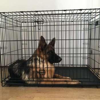 Best Crate For German Shepherd
