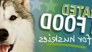 Best Dog Food For Siberian Husky