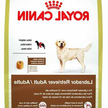 Best Dry Dog Food For Labrador Retrievers