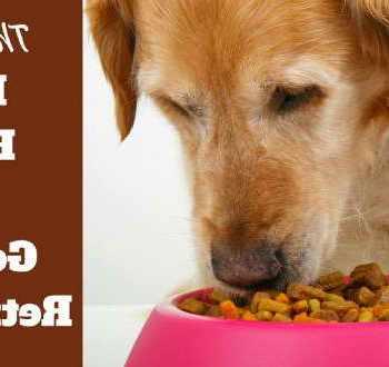 Best Dry Dog Food Golden Retriever