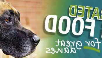 Best Great Dane Puppy Food