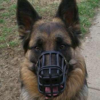Best Muzzle For German Shepherd