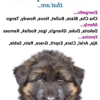 Best Names For German Shepherd Male