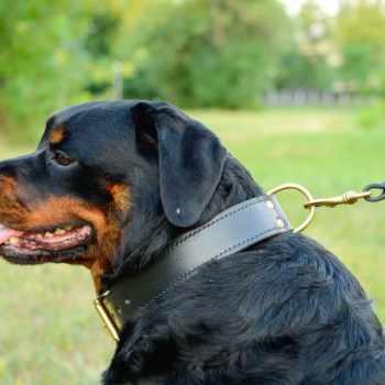 Best Shock Collar For Rottweiler