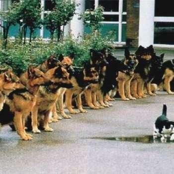 Best Trained German Shepherd