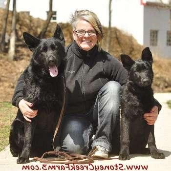 Black German Shepherd Puppies Colorado