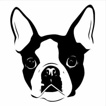 Boston Terrier Decals