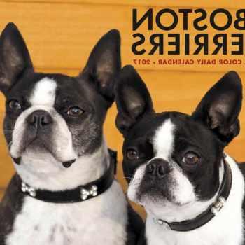 Boston Terrier For Sale Wisconsin