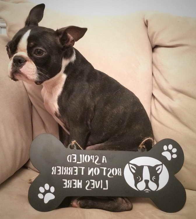Boston Terrier Signs