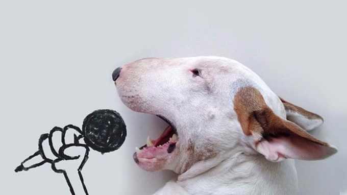 Bull Terrier Artist