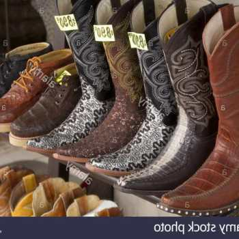 Chihuahua Boots Corpus Christi