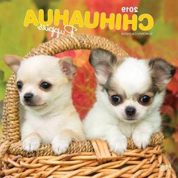 Chihuahua Calendar
