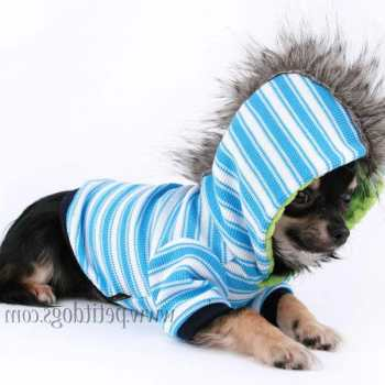 Chihuahua Clothes For Boys