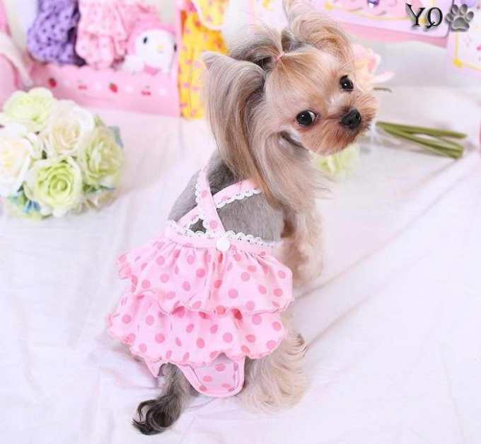 Chihuahua Clothes For Girls