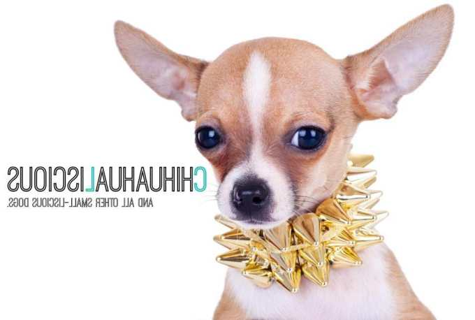 Chihuahua Collars And Harnesses