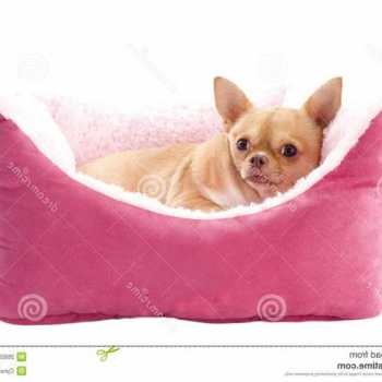 Chihuahua Dog Beds